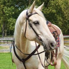 Circle Y Copper Mine Browband Headstall - TB