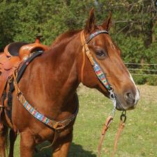 Big Country Tack Calaveras Collection - TB