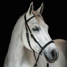 Bitless Bridle Headstall Beta