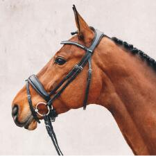 Schockemohle Stanford Bridle and Reins - TB