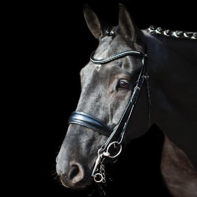 Schockemohle Milan Anatomic Dressage Double Bridle