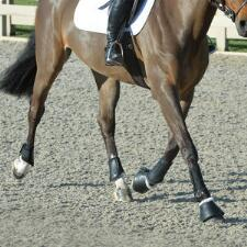EquiFit Essential Everyday Jumping Boot Set - TB