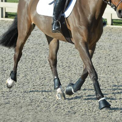 EquiFit Essential Everyday Jumping Boot Set