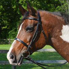 Tory English Bridle Flat Hunt with Plain Reins - TB