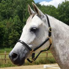 Quiet Creek Premium Leather Halter .75inch - TB