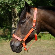 Adjustable Nylon Halter - TB