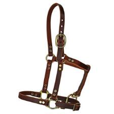 Hillside Riveted Leather Foal Halter - TB