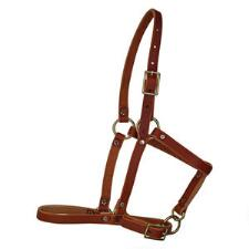 Berlin Leather Riveted Foal Halter - TB