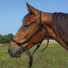 Rope Halter & Lead - TB