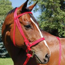 Walsh Nylon Race Headstall And Curb Strap - TB