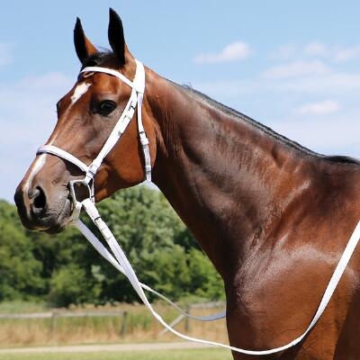 Walsh Thoroughbred Nylon Bridle - Complete