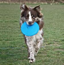 Jolly Pets Flyer Flying Disk That Floats Large - TB