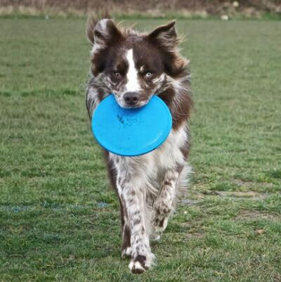 Jolly Pets Flyer Flying Disk That Floats Large