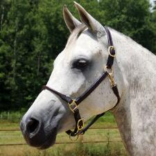 Quiet Creek Deluxe Rolled Nose Arabian Halter - TB