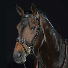 Collegiate Padded Flash English Bridle - TB