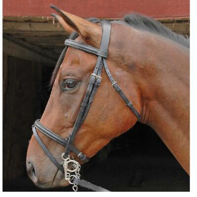 Raised Padded Flash Bridle with Laced Reins