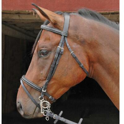 Raised Padded Flash Bridle with Web Reins