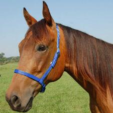 Thoroughbred Nylon Noseband