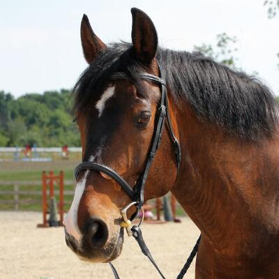 English Leather Snaffle Bridle