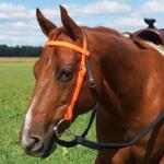 Weaver Trail Gear Browband Headstall Orange - TB