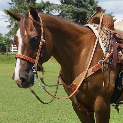 Cactus Saddlery Rough-Out Single Ear Headstall