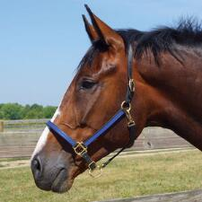 Beta Halter .75 in 2 Tone with Throat Snap  and Adjustable Nose - TB