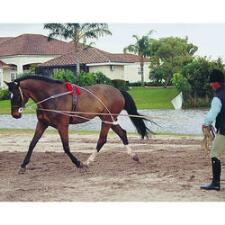 Pessoa Lunging System - TB