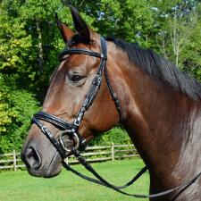 Ovation Dressage Bridle with Comfort Crown - TB