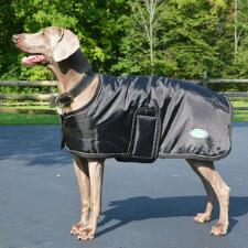 420D Nylon Dog Blanket  - TB