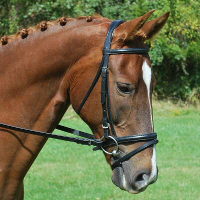 KL Select Red Barn Levade Padded Dressage Bridle