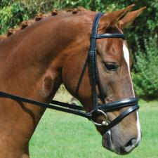 Red Barn Capriole Dressage Bridle Full Horse