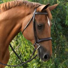 Red Barn Icon Square Raised English Bridle - TB
