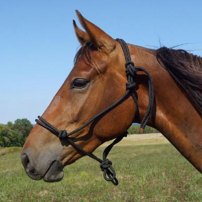 Rope Halter Horse Size