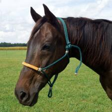 Cord Halter with Leather Wrap Nose band - TB