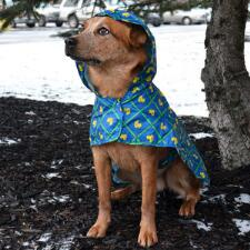 Dog Rain Poncho Packable