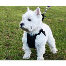 No Pull Dog Harness Black