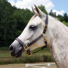 Quiet Creek 1 Inch Triple Stitched Leather Halter - TB