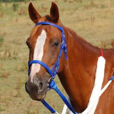 Thoroughbred Beta Bridle - Complete - TB