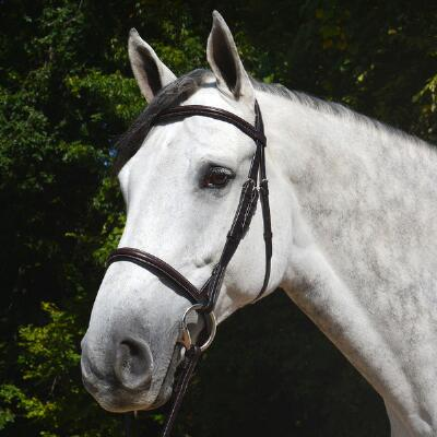Vespucci Plain Raised Hunter English Bridle