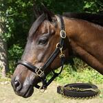 Fancy Stitched Padded Leather Halter with Matching Lead - TB