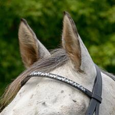 Shires Blue Leaf Elegant Browband - TB
