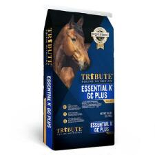 Tribute Essential K GC Plus - TB