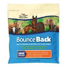 Bounce Back Electrolyte 4 oz Packet - TB