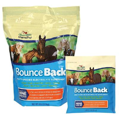 Bounce Back Electrolyte 4 oz Packet