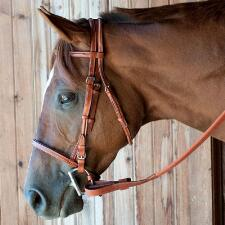 Champion Turf Thoroughbred Bridle Complete With Loop End Reins - TB