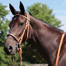 Thoroughbred Bridle Complete With Buckle End Reins