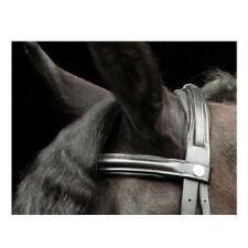 SW Double Buckle Padded Crown Piece