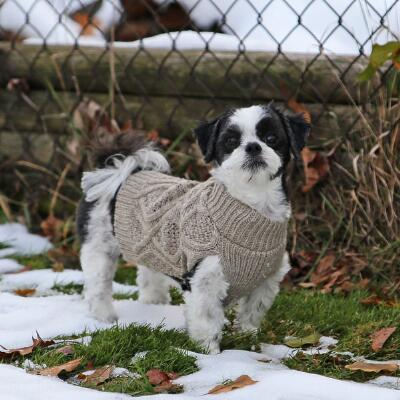 Dog Sweater Fisherman Cable Knit