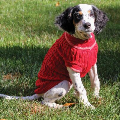 Dog Classic Cable Sweater Red