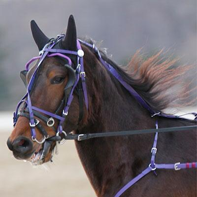 Feather-Weight Kant See Back Bridle Beta